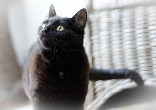 χρήσεις του ελαιόλαδου - γάτα
