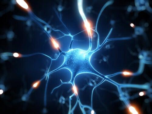 Ρεσβερατρόλη, μια εξαίσια ασπίδα για τον εγκέφαλο