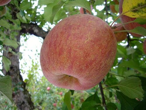 Καλύτερα φυσικά καθαρτικά - Μήλο