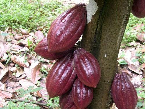 Ποιες είναι οι ευεργετικές ιδιότητες της σοκολάτας