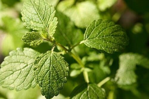 φυτά για τη βελτίωση της διάθεσης