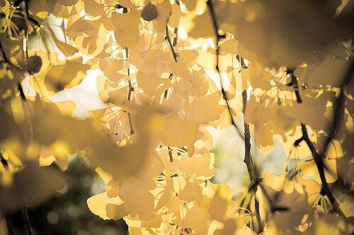 Ανακουφιστείτε από τους πόνους της φλεβίτιδας - Κιτρινισμένα φύλλα δέντρου