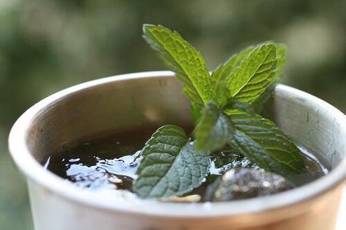 πράσινο τσάι, θεραπεία του εντέρου