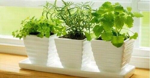 10 φυτά που προσελκύουν θετική ενέργεια
