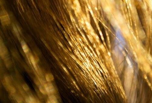 Πείτε αντίο στα ξηρά μαλλιά με φυσικές θεραπείες