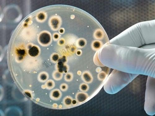 Εξέταση βακτηρίων σε εργαστήριο