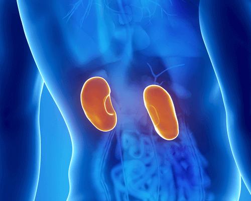Λοίμωξη στα νεφρά - Ψηφιακή αναπαράσταση νεφρών