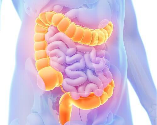 συνηθισμένοι τύποι καρκίνου- του παχεος εντερου