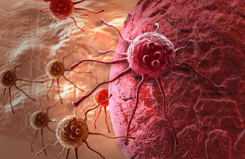 πικρό πεπόνι  και καρκινος