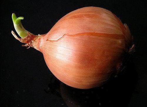 Μπορείτε να καλλιεργήσετε κρεμμύδια στο σπίτι;