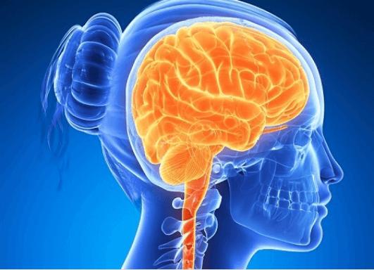 6 τροφές για ενεργό και δραστήριο εγκέφαλο