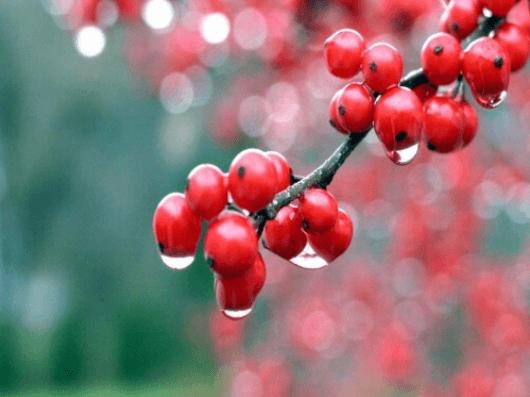Βότανα που προσφέρουν ενέργεια - Γκουαρανά