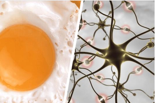 Τροφές και προτάσεις για τη βελτίωση της μνήμης