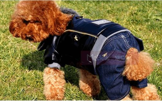 Παλιά τζιν - Σκύλος με τζιν ρούχα