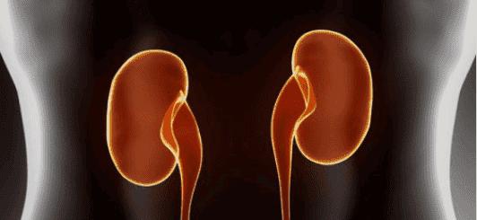 νεφρά απο τα οργανα που επηρεάζει το στρες