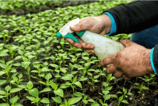 προϊόντα που επηρεάζουν το θυρεοειδή - φυτοφάρμακα