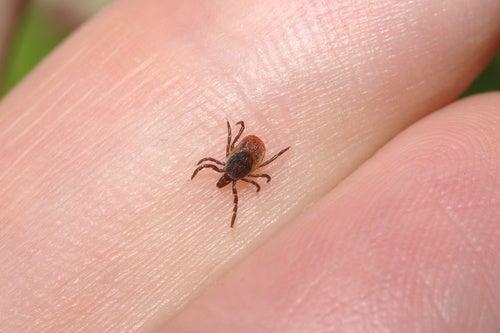 νόσος του Lyme
