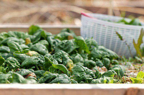 Τροφές πλούσιες σε σίδηρο για την κόπωση και την ημικρανία