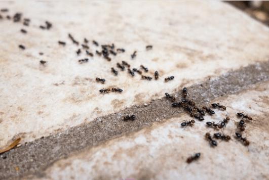 Απωθητικά μυρμηγκιών χωρίς χημικά αλλά φυσικά