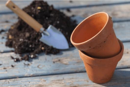 Πως να καλλιεργήσετε ντομάτες στο σπίτι σας, γλάστρα
