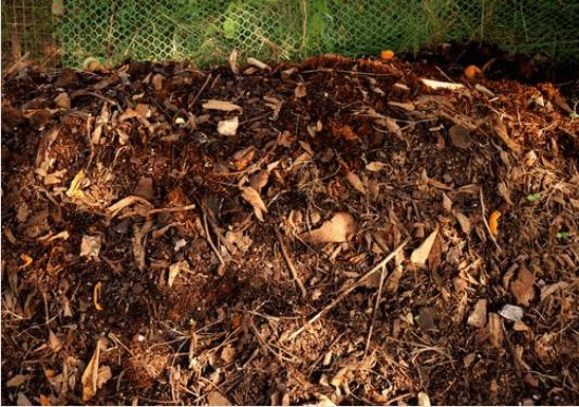 Πως να καλλιεργήσετε ντομάτες στο σπίτι σας, χώμα