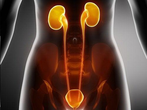 Αντιμετώπιση των λοιμώξεων στην κύστη, στην ουρήθρα και στα νεφρά