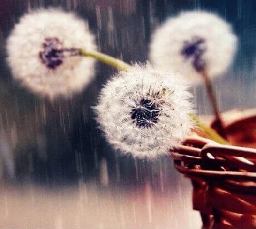 Τέλεια σχέση - Λουλούδια