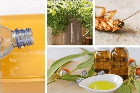Απωθήστε τα έντομα στο σπίτι χωρίς τοξικά χημικά