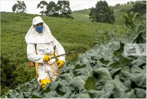 Πως θα ξεπλένετε τα φυτοφάρμακα από φρούτα και λαχανικά