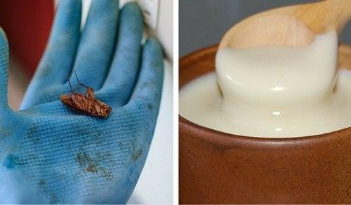 Τι να κάνετε για να εξουδετερώσετε τις κατσαρίδες