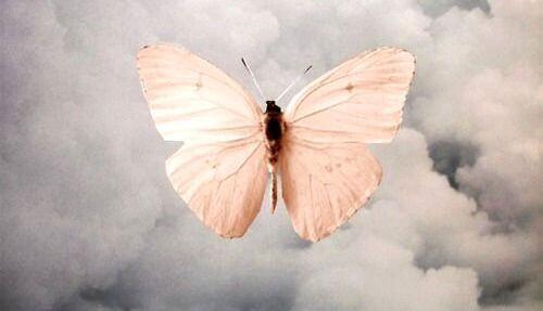 Εσωτερική διεργασία - Πεταλούδα