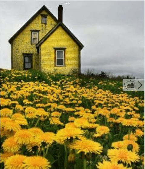 σπίτι  με λουλούδια