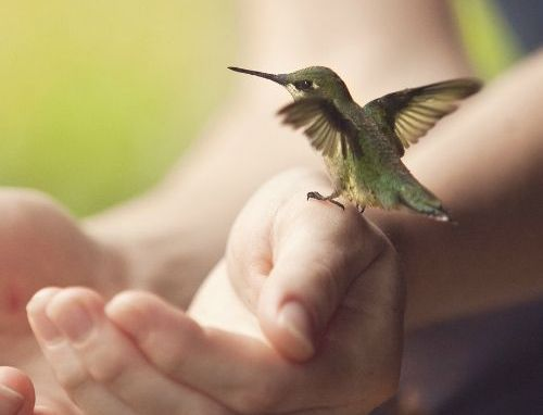 Τοξικές φράσεις στον εσωτερικό διάλογό μας - Κολιμπρί στέκεται σε ανθρώπινο χέρι