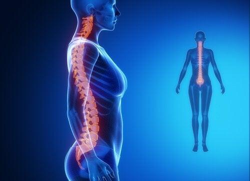 Η σπονδυλική στήλη - Ψηφιακή απεικόνιση ανθρώπινης σπονδυλικής στήλης