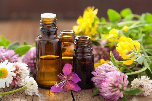 aromatika elaia