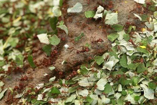 Χρήσεις της κανέλας - Μυρμήγκια