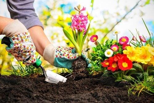 Χρήσεις της κανέλας - Άτομο περιποιείται τον κήπο