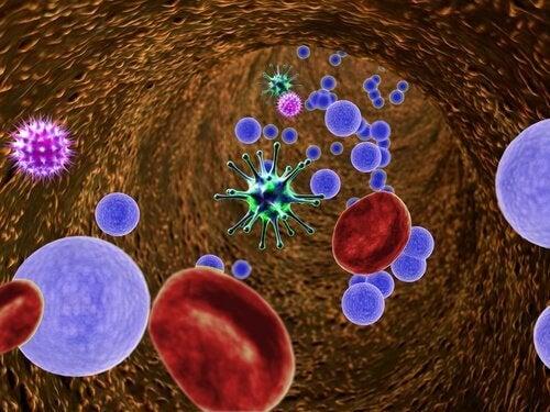 Κατανάλωση μιας σκελίδας σκόρδου - Κύτταρα αίματος