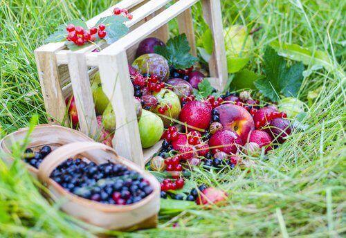 μήλα,βατόμουρα, μπασκέτα, φρούτα, smoothies για τη δυσκοιλιότητα