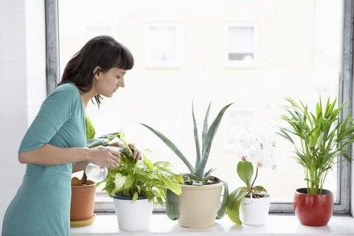 8 φυτά που καθαρίζουν τον αέρα του σπιτιού σας