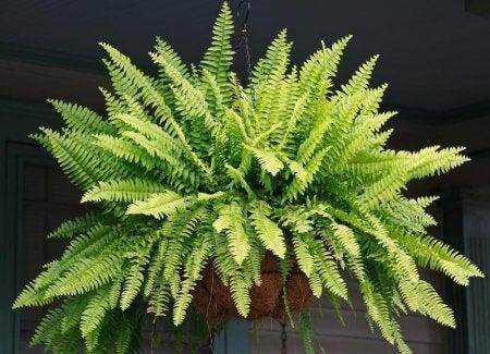 φυτό, διακόσμηση, φυτά που καθαρίζουν τον αέρα του σπιτιού σας