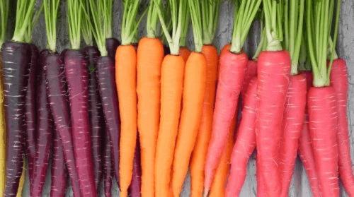 μωβ καρότα, πορτοκαλί καρότα
