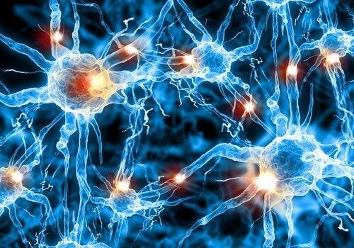 Μιλάμε στον ύπνο μας - Ψηφιακή αναπαράσταση νευρώνων