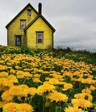 κίτρινο σπίτι σε λιβάδι κριτική για τους άλλους