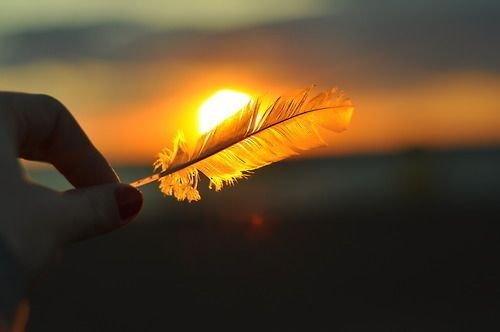 Φτερό στο ηλιοβασίλεμα