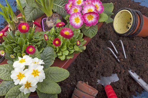 λουλούδια, κήπος
