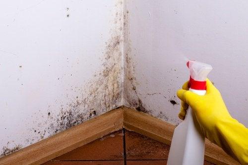 Αφαιρέστε τα σημάδια από την υγρασία στους τοίχους και τις οροφές
