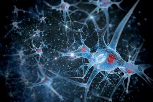 Σχηματική απεικόνιση νευρώνων, ωφέλειες της μπύρας