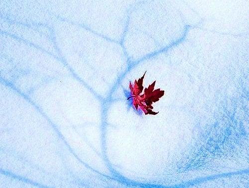 Φύλλο στο χιόνι δύσκολες στιγμές