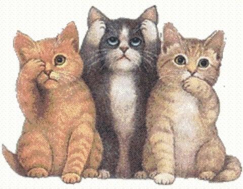 μια πορτοκαλή μια μαύρη και μια άσπρη γάτα